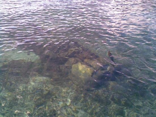 Japanese plane wreck from WWII - Picture of Sam's Tours Palau, Koror