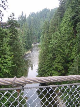 Capilano Suspension Köprüsü ve Parkı: On the worldest longest suspension bridge in Vancouver BC!