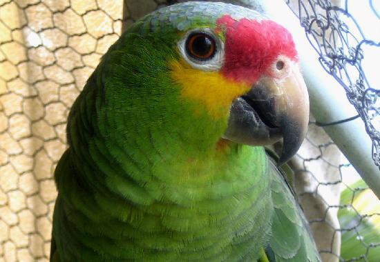Hacienda San Pedro Nohpat: parrot