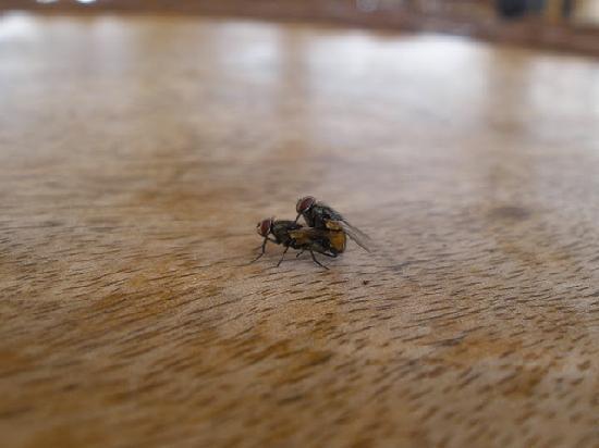 Zoetry Paraiso de La Bonita: flies..multiplying