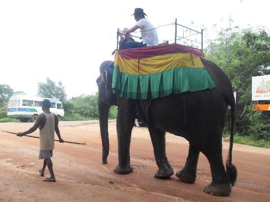 Shini's Place : Elephant Rides