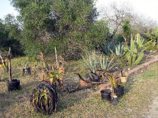 1 South Texas Botanical Gardens Nature Center