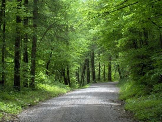 Tellico Plains, TN: A Road Less Traveled