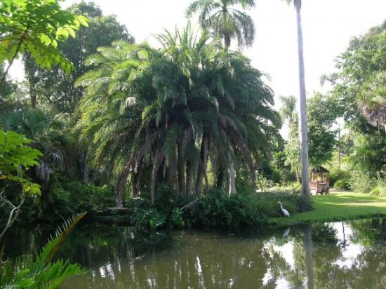 Jungle Gardens Sarasota Fl Foto Di Sarasota Jungle Gardens Sarasota Tripadvisor