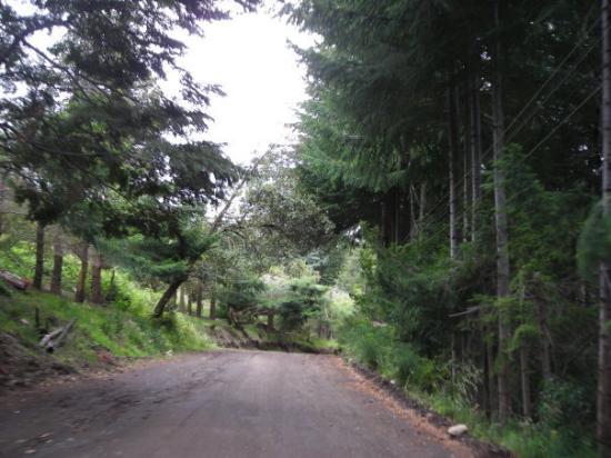 Caminos internos en Villa Traful