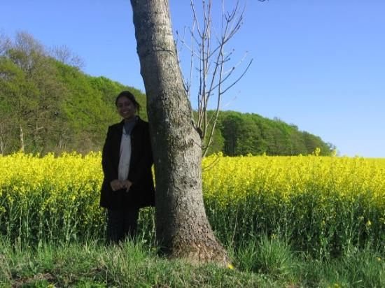 Can you guess where am I? Does not it look like some field in Punjab??  Its in Aarhus, Denmark;