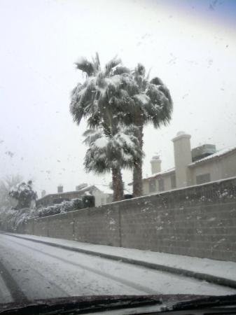 Hike This! Private Tours: Palm Trees and Snow? Betcha won't ever see this again!