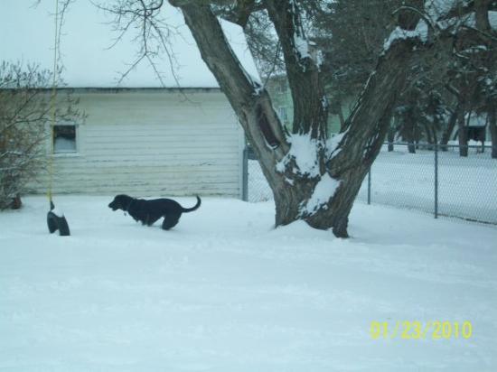 Bottineau, ND: Jade enjoying the snow in the backyard