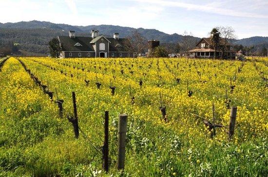 Corison Winery, St. Helena, CA, United States
