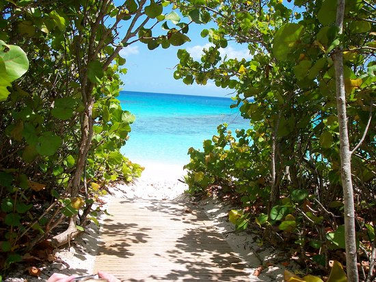 St. John Seasonal & Cultural Highlights: Peeking through the trees