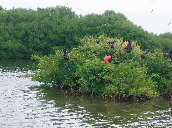 Halcyon Cove by Rex Resorts: Bird Island in Barbuda
