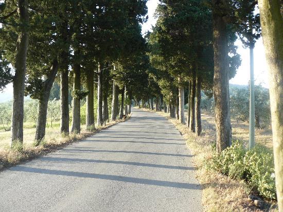 Pontassieve, Italia: Road behind Fattoria Lavacchio