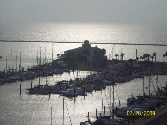 BEST WESTERN Padre Island: close up of our view