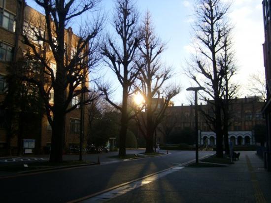 University of Tokyo: 東京大学