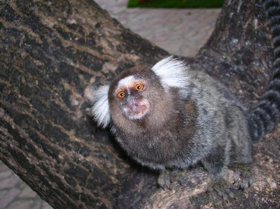 Serrambi Resort: La fauna