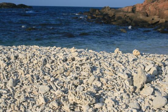 Trincomalee, Sri Lanka: Pigeon Island : les amas coraliens sur la plage crique