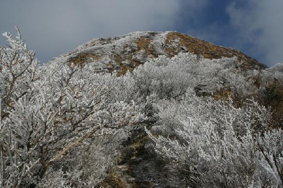 Unzen Ropeway : 樹氷