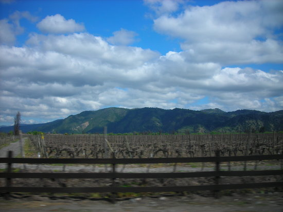 Curicó Valley Wine Route