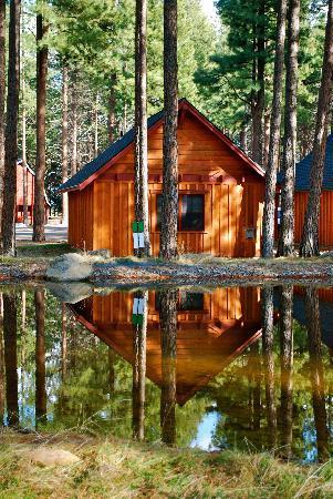 Five Pine Lodge & Spa : Cabins