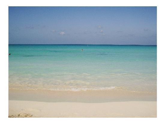 Coral Seas Garden: stunning water