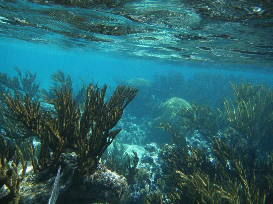 Plage d'Akumal: reef