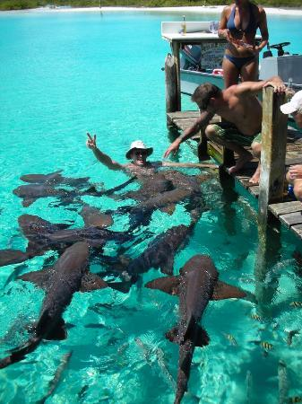 Staniel Cay: Swim with the sharks!