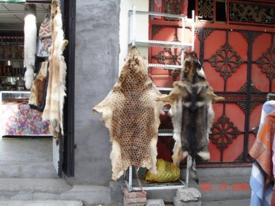 Jiuzhaigou County, Kina: Oh I'm gunna hear it from PETA about this one