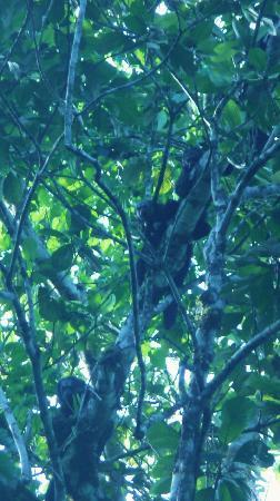 Yarina Eco Lodge: A not very common monkey species in this area, the Monk Saki Monkey