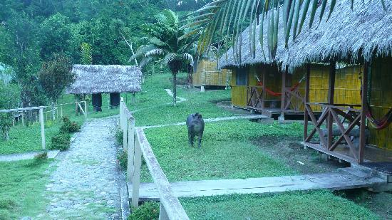 Yarina Eco Lodge: Christina walking between the cabins