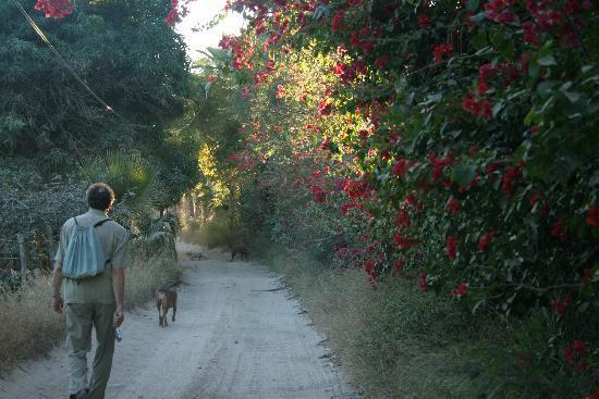 The Hotelito: Hotelito - The dogs lead the way to the beach