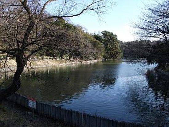 Tokai, Japan: 池には渡り鳥