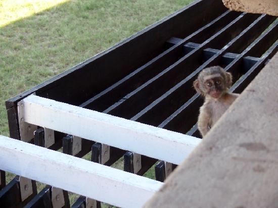 Seronera Wildlife Lodge: little thief