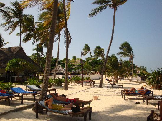 Karafuu Beach Resort and Spa: In ozio sotto il palmeto