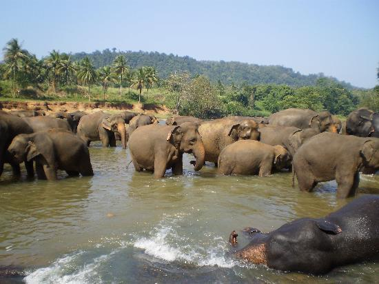 Freedom Lodge: Elephant Orphanage, about an hour from Kandy