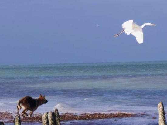Holbox Island Görüntüsü