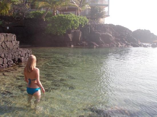Royal Kona Resort: The water is very clear, lots of tropical fish hanging around :)