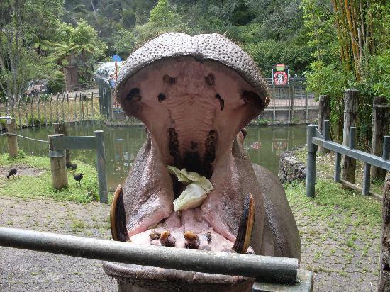 Auckland Zoo: Om nom nom