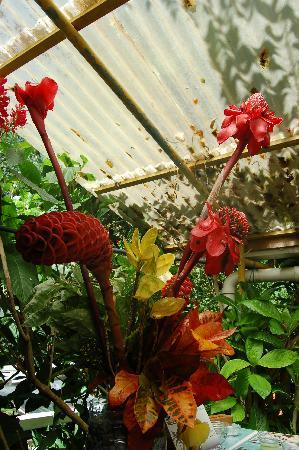 La Mandala Appart'Hotel : fleurs mandala