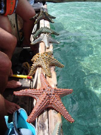 VOI Kiwengwa Resort: barriera di fronte all'hotel, stelle marine