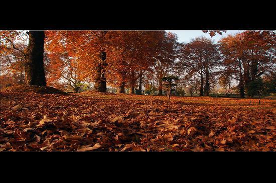 Jammu and Kashmir, India: Fall colors 2