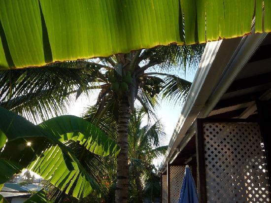 Dolphin Inn: Coconut palm shading the veranda