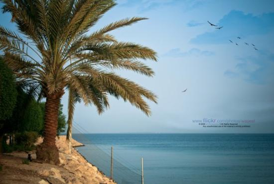Al Khobar, Arabia Saudita: Nature Creativity