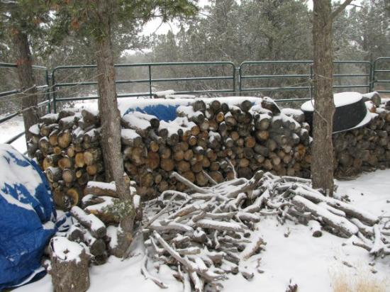 Trinidad, CO: firewood in the front yard
