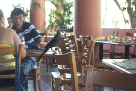 Allegro Papagayo: breakfast visitor