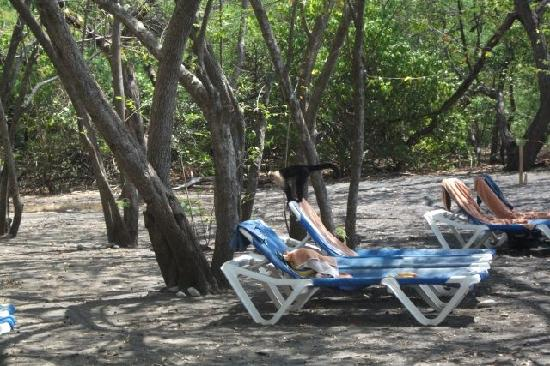 Allegro Papagayo: keep an eye on your fruit when relaxing on the beach