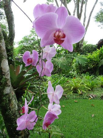 Villas de Trancoso Hotel: Beautiful orchid
