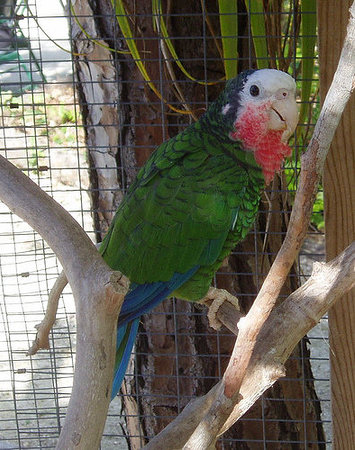 Freeport, Grand Bahama Island: A tropical bird at The Rand...