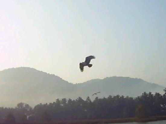 Jungle Lodges Devbagh Beach Resort: eagle