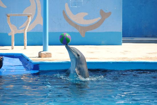 Dolphin Discovery Puerto Vallarta: Dolphin