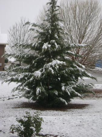 Prescott Valley-billede